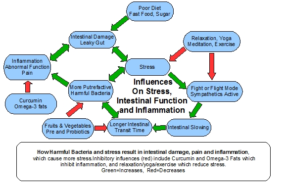 flow chart stress intestinal function inflammation