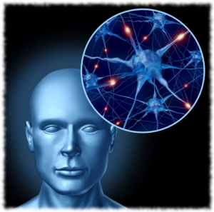 Human intelligence brain medical symbol represented by a close up of active neurons and organ cell activity related to neurotransmitters showing intelligence with memory and healthy cognitive thinking activity.